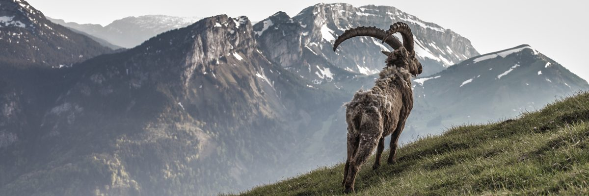 King of the alps